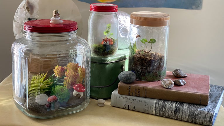 Make a nature terrarium.